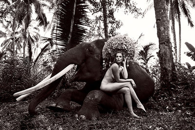 Elephant nude