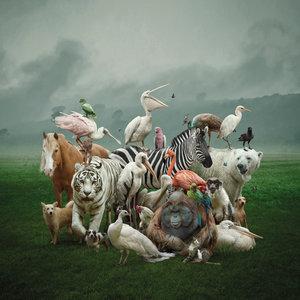 Noah's ark - Fotokunst dieren