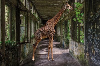 Big in the building - Fotokunst gebouw giraffe