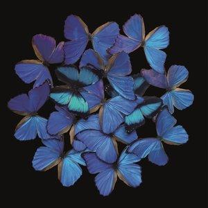 Empire blue - Fotokunst vlinders