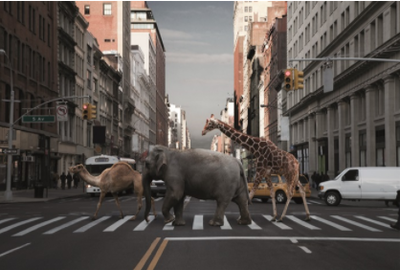 Fotokunstwerk - Animals in the city