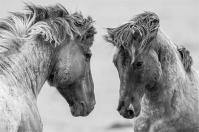 Fotokunst paarden