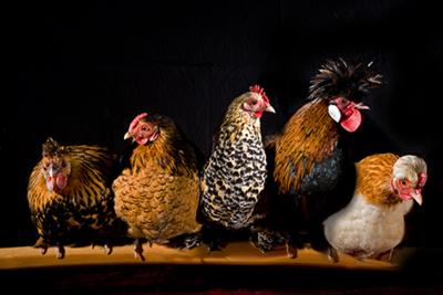 Fotokunst kippen