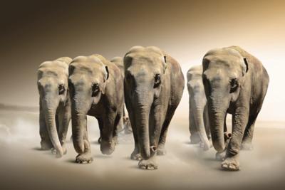 Fotokunst olifanten
