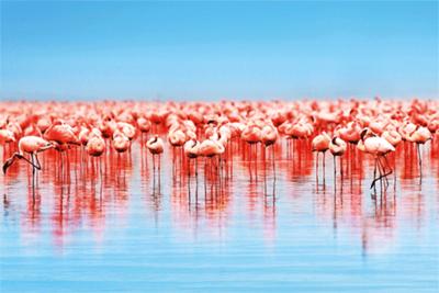 Fotokunst flamingo's