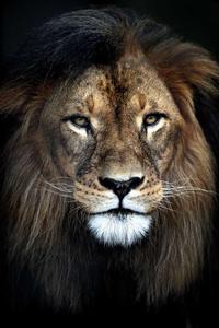 Fotokunst leeuw
