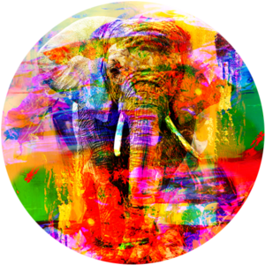 Colourful Elephant  | Fotokunst rond