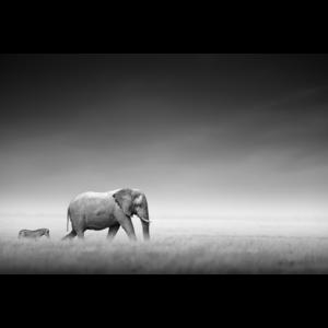Fotokunst olifant en zebra