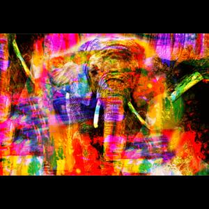 Fotokunst olifant kleurrijk