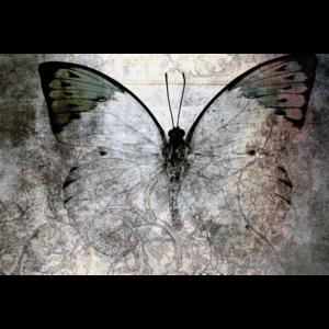 Fotokunst vlinder