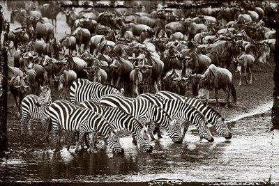 Synchronized nature