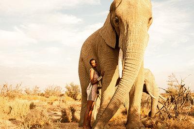 Elephant's gaze