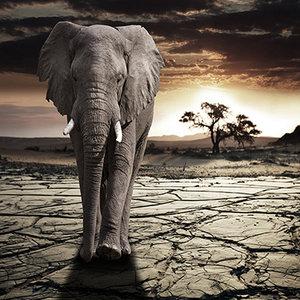 Elephant in dusk