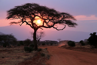 Dawn of tree