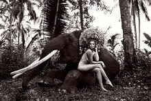 Elephant-nude