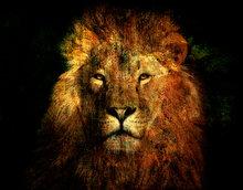 Lions-law