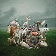 Noahs-ark-Fotokunst-dieren