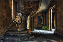 Lion-Entrance-Fotokunst-leeuw