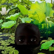 The-lotus-flower