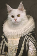 Fotokunst-Prince-Royal-Cat