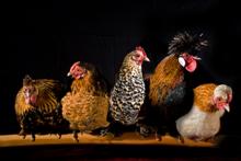 Fotokunst-kippen