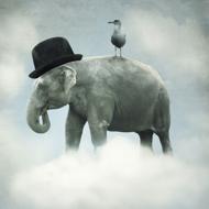 Fotokunst-olifant