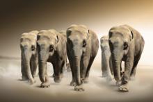 Fotokunst-olifanten