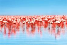 Fotokunst-flamingos