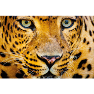 Fotokunst-luipaard