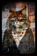 Cats-Mind