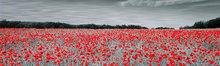 Fotokunst-klaprozen-veld-200x60-cm