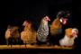 Fotokunst kippen_8