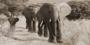 Fotokunst olifanten 160x80 cm_8