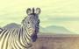 Fotokunst vintage zebra_8