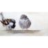 Fotokunst vogels _8