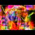 Fotokunst olifant kleurrijk_8