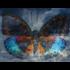 Fotokunst vlinder_8